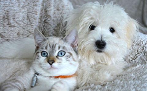 Dosing Your Pet