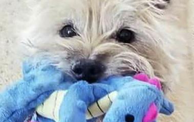 Rocky Mountain Girls Hemp Products Pet Testimonials.jpg