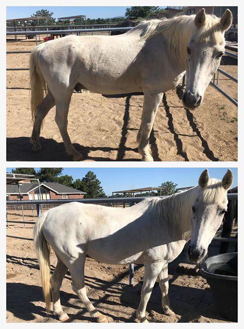 Rocky Mountain Girls Equine Hemp-Horse CBD-Equine Hemp Pellets Testimonials - Ailen P.