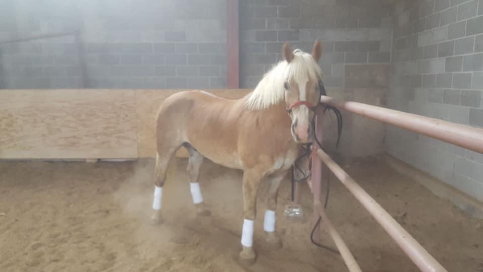 Rocky Mountain Girls Equine Hemp-Horse CBD-Equine Hemp Pellets Testimonials - Candice B