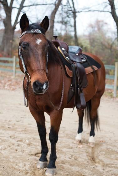 Rocky Mountain Girls Equine Hemp-Horse CBD-Equine Hemp Pellets Testimonials - Dash and Beth N