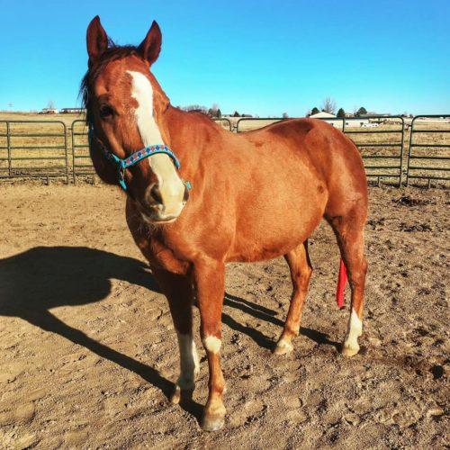 Rocky Mountain Girls Equine Hemp-Horse CBD-Equine Hemp Pellets - Twix and Krysti M