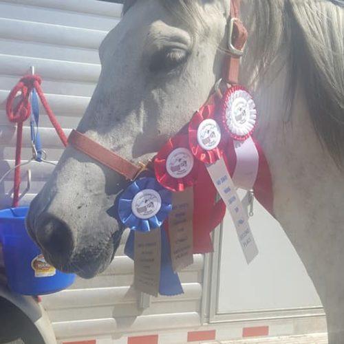 Rocky Mountain Girls Equine Hemp-Horse CBD-Equine Hemp Pellets 2
