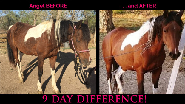Rocky-Mountain-Girls-Hemp-Products---Equine-Hemp-Pellets-Testimonial-Angel-The-Horse-Nine-Day-Difference