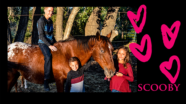 Rocky-Mountain-Girls-Hemp-Products---Equine-Hemp-Pellets-Testimonial-Scooby-The-Horse