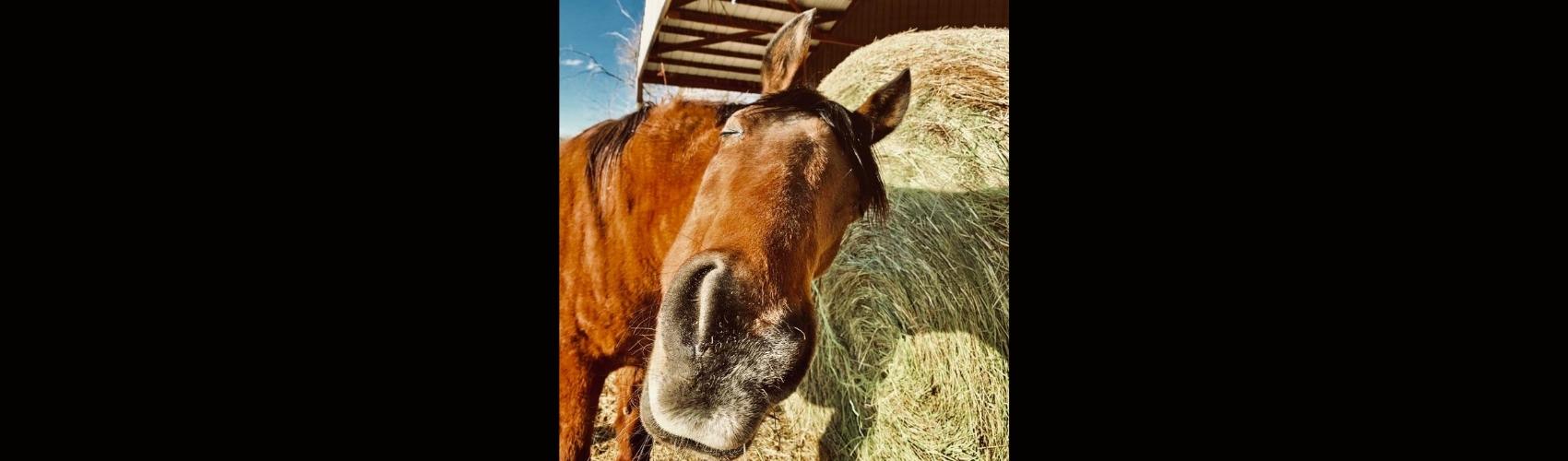 Horse Hemp - Meadow Blog Feature Image