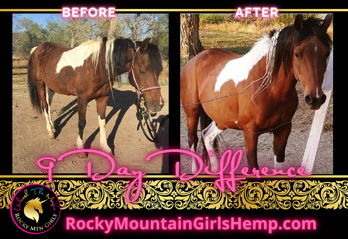Horse CBD Before and After